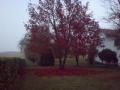 bb_vallara_giardino.png