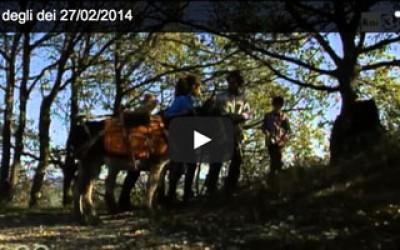 itinerario, itinerario a piedi, viaggio a piedi, documentario, Via degli Dei